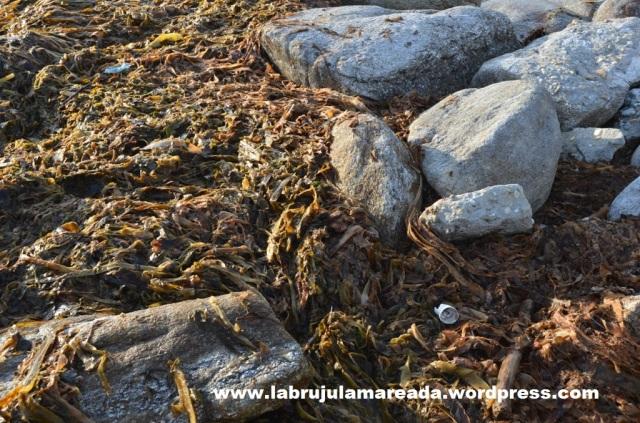 plásticos contaminación marina
