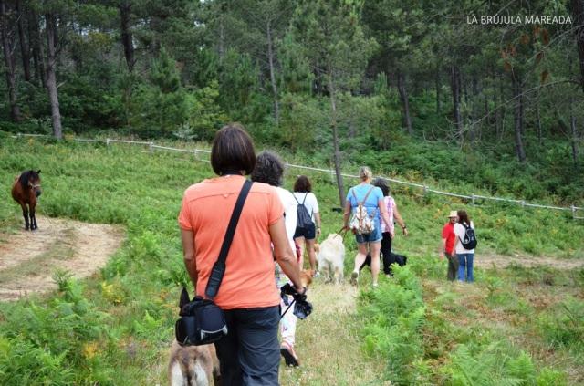 Un día de perriturismo y petroglifos en Campo Lameiro (Pontevedra)